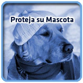 mascota_abrigada