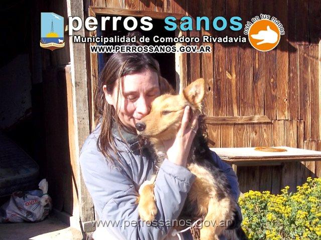 perros_sanos