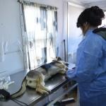 Municipio realizó 5000 cirugías de esterilización canina y felina en lo que va del año