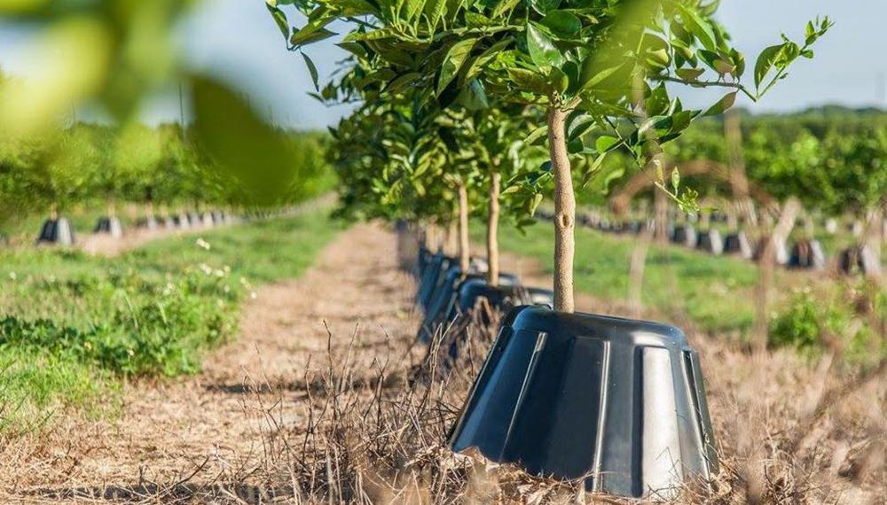 Comienza un Censo de productores de frutales