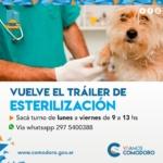 Esta semana se reestablece el servicio de esterilización gratuita