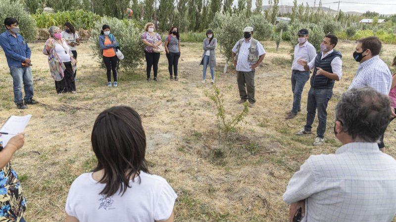 El Municipio avanza a paso firme en el desarrollo de la olivicultura